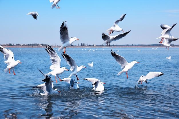 Gaivotas brancas voando sobre a superfície da água
