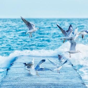 Gaivotas brancas voando sobre o cais, tonificadas