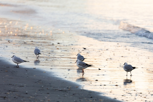 Gaivotas comendo na costa da praia