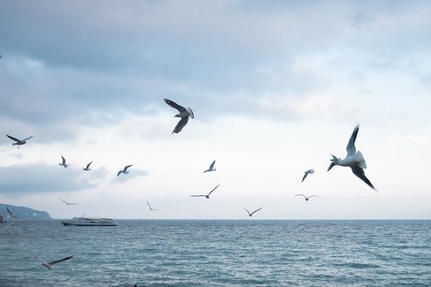 Gaivotas de marfim sobrevoam a costa do mar