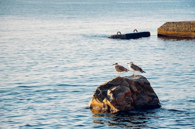 Gaivotas está sentado na pedra sobre o nascer do sol do mar