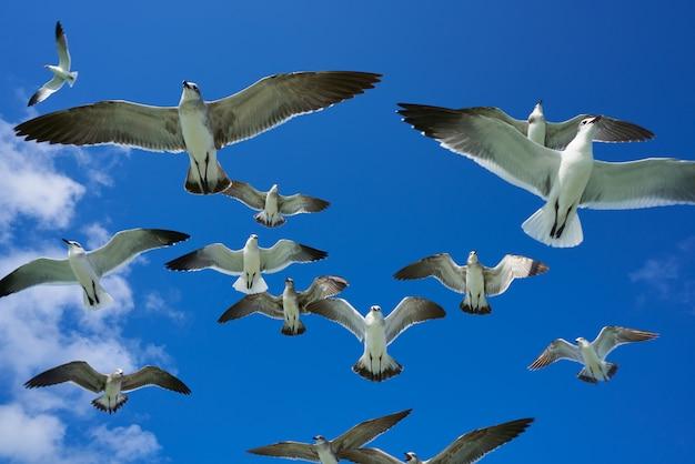 Gaivotas gaivotas voando no céu azul