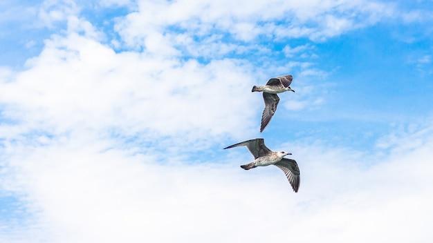 Gaivotas lindas voando em um céu nublado