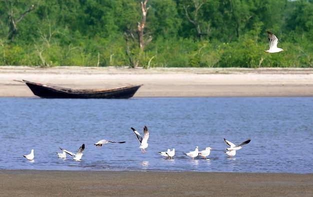 Gaivotas na praia marítima de kuakata, em bangladesh