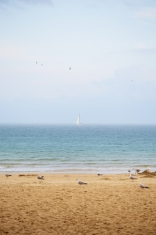 Gaivotas nas belas praias. bulgaria nessebar