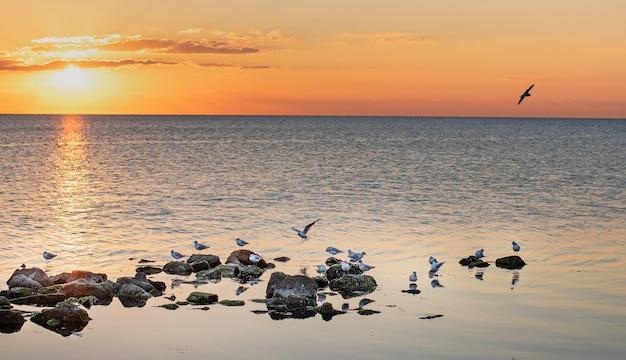 Gaivotas no mar ao pôr do sol