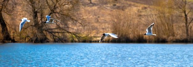 Gaivotas no rio, gaivotas voando perto da costa