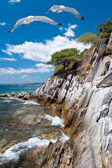 Gaivotas pela costa rochosa em sithonia, norte da grécia
