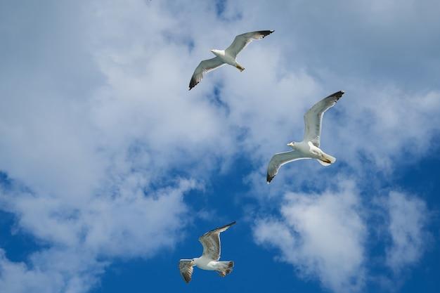 Gaivotas que voam no céu