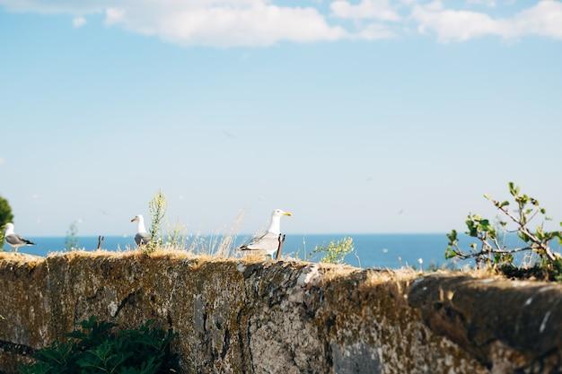 Gaivotas sentadas na parede à beira-mar