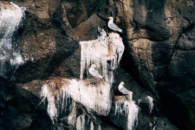 Gaivotas sentadas nas rochas