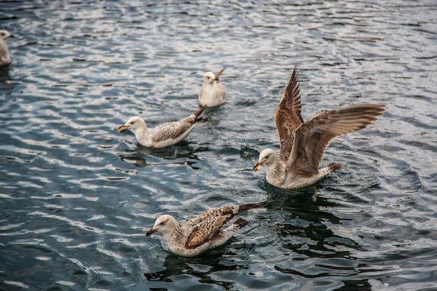 Gaivotas voam e comem no cais em istambul.