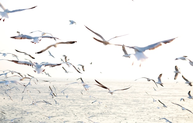 Gaivotas voando à beira-mar, natureza animal voam floresta de mangue a noite de praia