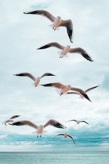 Gaivotas voando acima do mar