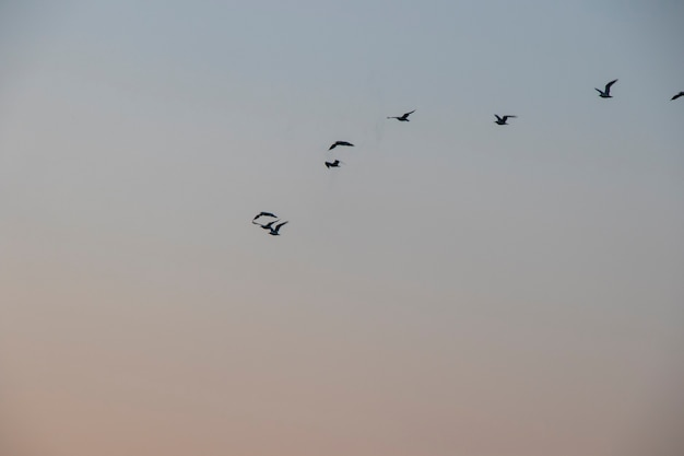 Gaivotas voando, céu ao pôr do sol e pássaros marinhos na geórgia