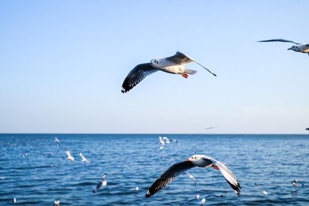 Gaivotas voando em bang poo, passeio de pássaros, província de samutprakan, lugar famoso na tailândia