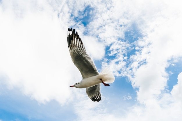 Gaivotas voando na praia tropical