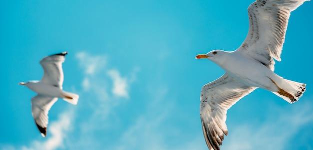 Gaivotas voando no ar