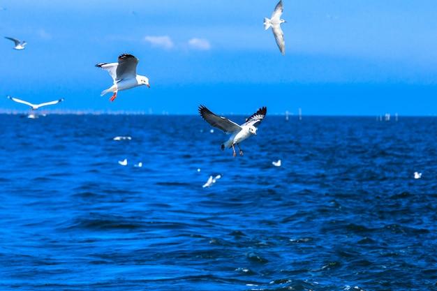 Gaivotas voando no céu azul e mar tropical