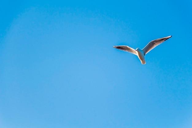 Gaivotas voando no céu azul em dia ensolarado