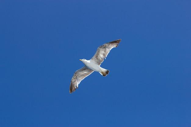 Gaivotas voando no céu azul ensolarado ao longo da costa do mar adriático