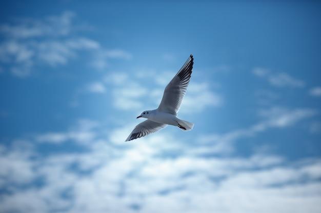 Gaivotas voando no céu azul