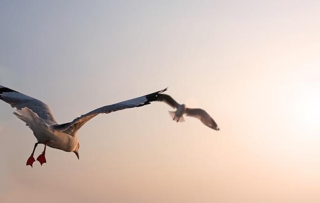 Gaivotas voando no céu. Foto Premium