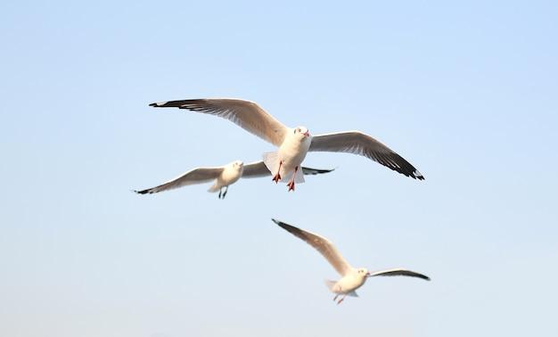 Gaivotas voando no céu