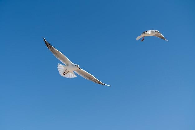 Gaivotas voando no fundo do céu azul