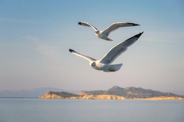 Gaivotas voando sobre o mar