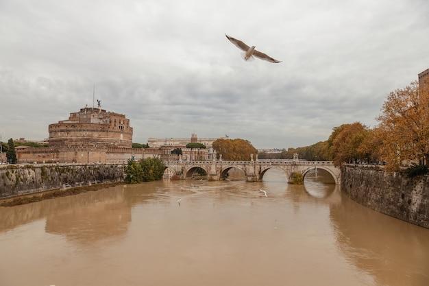 Gaivotas voando sobre o tibre roma itália