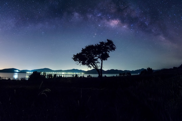 Galáxia da via látea acima da árvore.