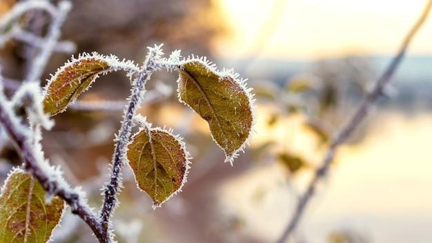 Galho coberto de geada com folhas na margem do rio em uma manhã ensolarada