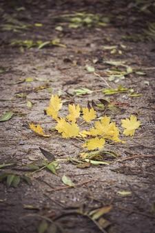 Galho com folhas amarelas no chão escuro, filtro