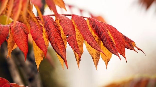 Galho com folhas de outono em um fundo claro em cores quentes