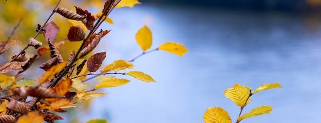 Galho com folhas secas de outono perto do rio em um fundo desfocado. fundo de outono