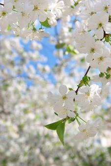 Galho de árvore branca grande