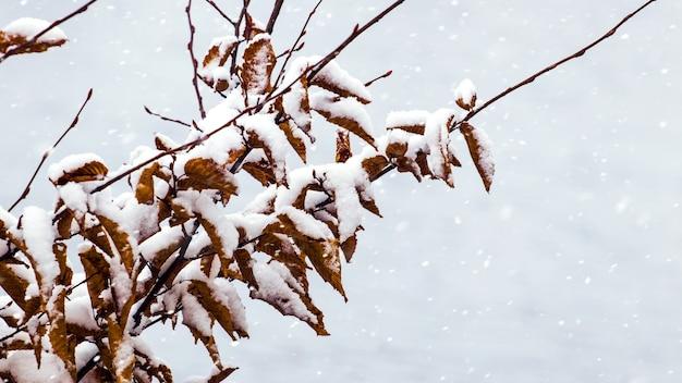Galho de árvore coberto de neve com folhas secas durante uma nevasca