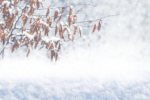 Galho de árvore coberto de neve com folhas secas na floresta de inverno durante uma nevasca
