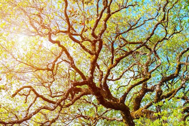 Galho de árvore com a luz solar. fundo natural fresco. pano de fundo abstrato.