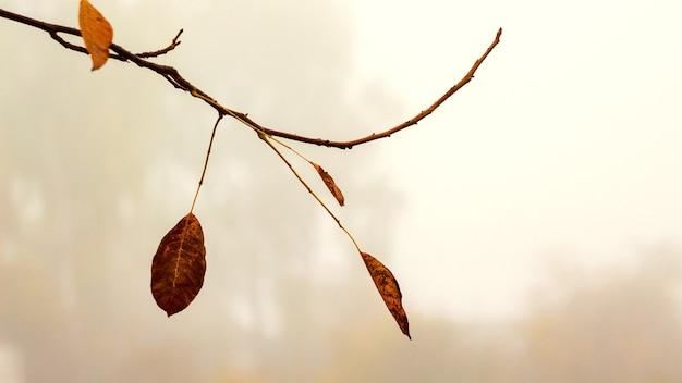 Galho de árvore com as últimas folhas secas de outono em um fundo desfocado em cores quentes
