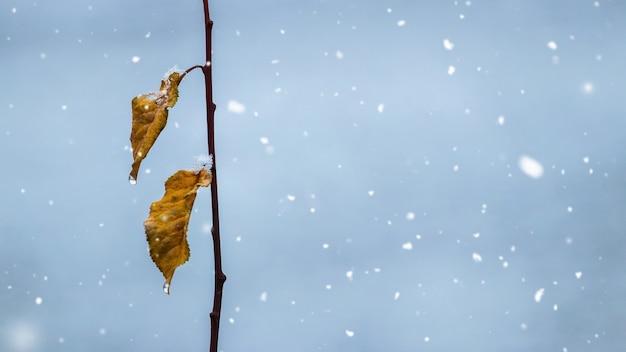 Galho de árvore com as últimas folhas secas durante uma nevasca, copie o espaço