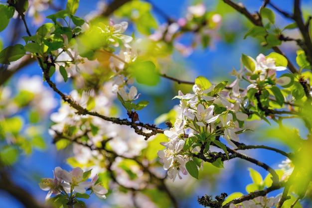 Galho de árvore com flores e céu azul ao fundo