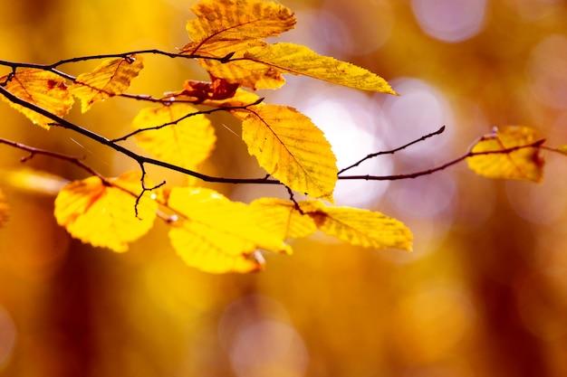 Galho de árvore com folhas amarelas na floresta de outono em tons quentes e brilhantes de outono