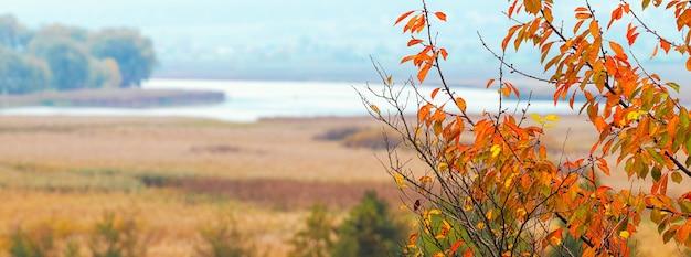 Galho de árvore com folhas de outono laranja à beira do rio. planície espaçosa com um rio no outono