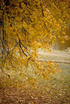 Galho de árvore com folhas douradas