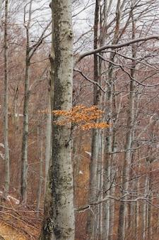 Galho de árvore com folhas em uma floresta durante o outono na montanha