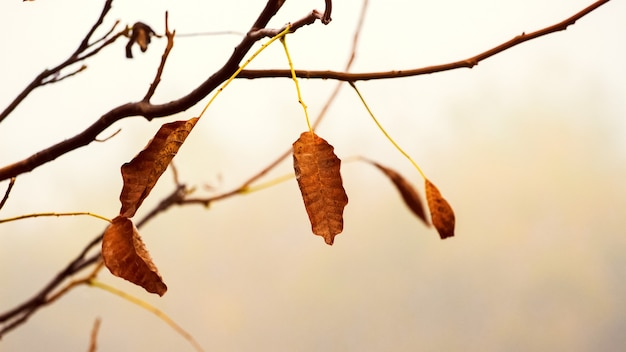 Galho de árvore com folhas secas de outono em cores quentes