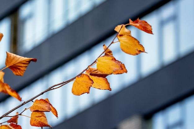 Galho de árvore com folhas secas de outono no fundo de um arranha-céu moderno