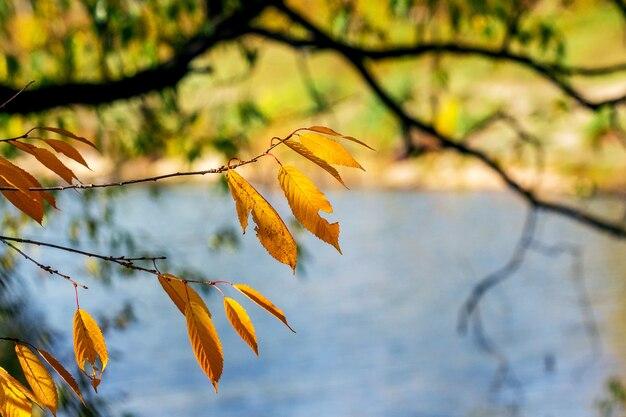 Galho de árvore com folhas secas de outono perto do rio